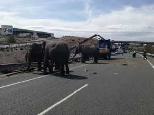 One elephant dead after circus truck crashes in Spain