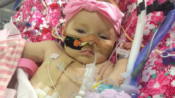 The little fighter, Emerald who was flown to Sydney last month.