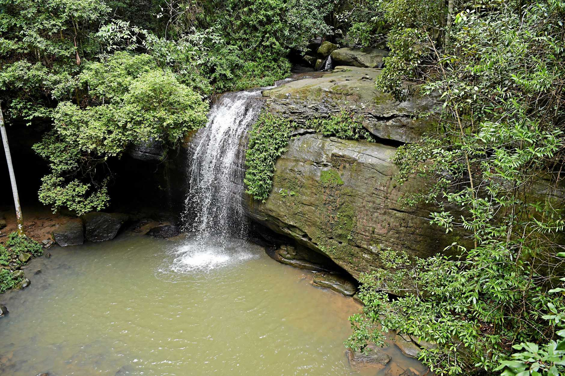 Serenity Falls, Buderim Forest Park, is flowing after recent rain.