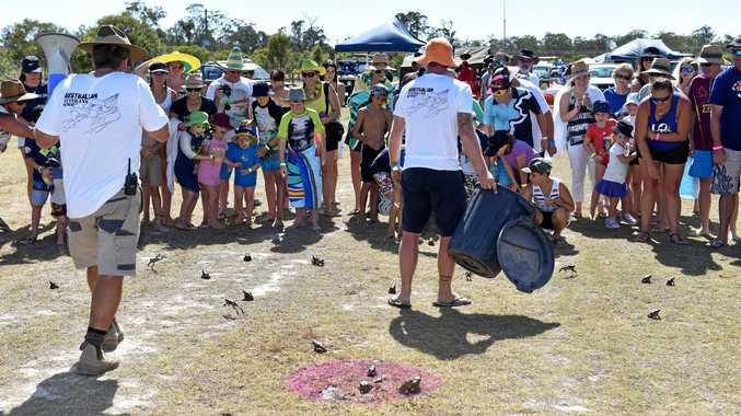 PLAY TIME: Queenslanders seem more friendly towards cane toads than the DPI says they should be.
