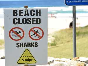 Calls for applications to reduce risk of shark attacks