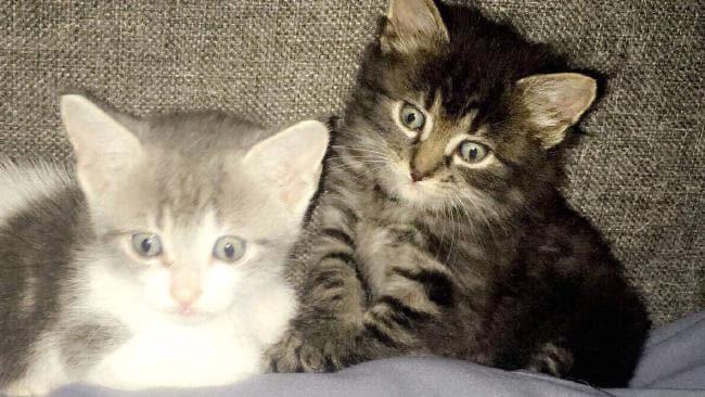 Milo and Frankie