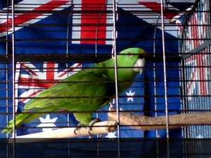 Singing Bird gets the Aussie Spirit