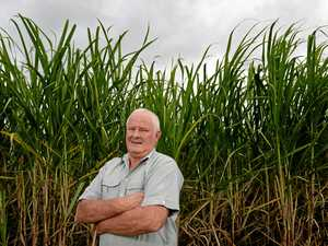 Orchards, grazing could take over marginal cane land