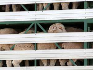 Minister 'disgusted' by disturbing live export footage