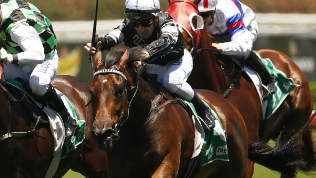 Victorem is among the favourites for the Country Championships Final. Picture: AAP