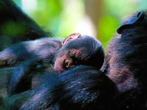 VOTE: Top 5 names for baby chimp