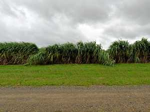 North Queensland sugarcane farmers brace for rough ride
