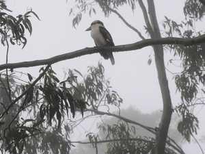 Fresh, foggy mornings will continue all week