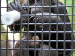Name chosen for baby chimp as advertising campaign kicks off