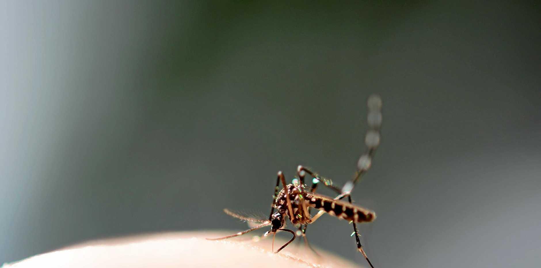 Council advises on how to prevent dengue fever.