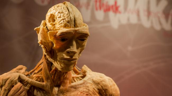 'Real Bodies: The Exhibition' explores life by displaying real, perfectly preserved human bodies and over 200 anatomical specimens.
