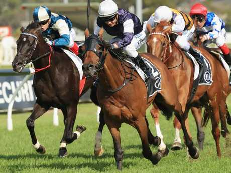 Lloyd Williams says Almandin is the fittest he has ever seen him heading into the Sydney Cup. Picture: Getty Images