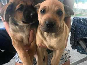 Road trip: dumped puppies on their way to new homes