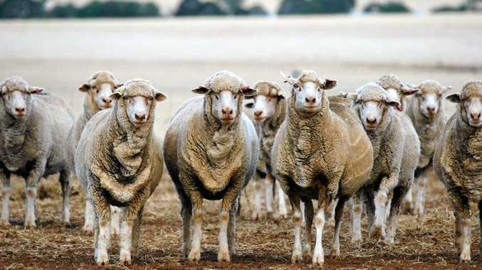 MAJOR ISSUE: The live export of Australian sheep has been put into the spotlight recently.