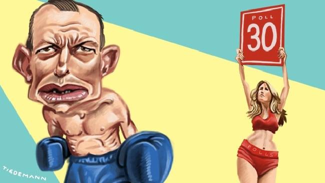 Tony Abbott in fighting mode again after Malcolm Turnbull's 30 News Poll loss. Artwork: John Tiedemann