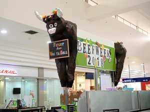Bulls roaming the aisles of Stockland Rockhampton