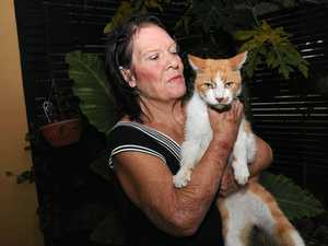 'Amazing story if Sharkie the cat could talk'
