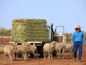Local graziers braced for impact from live export fall out