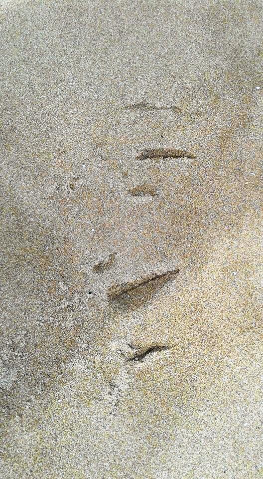 The footprints are baffling Bundaberg.