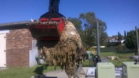 A wet wipe 'fatberg' being removed from the sewer.