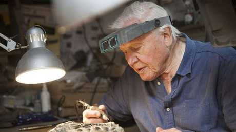 Sir David Attenborough in a scene from the documentary David Attenborough and the Sea Dragon.