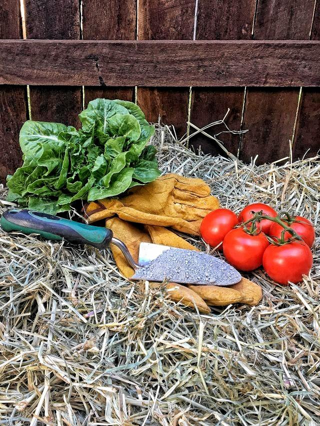 Take care of your garden's soil and you'll be able to eat the rewards.