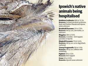 Habitat clearing's horrific toll on Ipswich wildlife