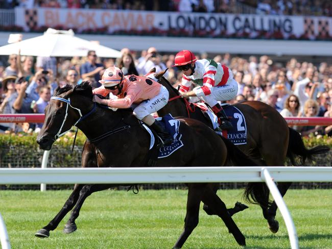Black Caviar pips Hay List - again.