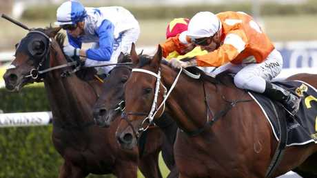 Who Shot Thebarman, the oldest horse in the Sydney Cup, dug in to edge out Zacada in a thrilling finish. Picture: AAP
