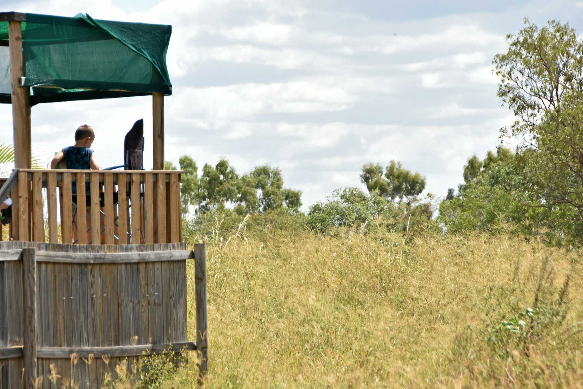 LOOK OUT: William Veit, 4, checks out the long grass growing next to his mum Kate's Calliope property.