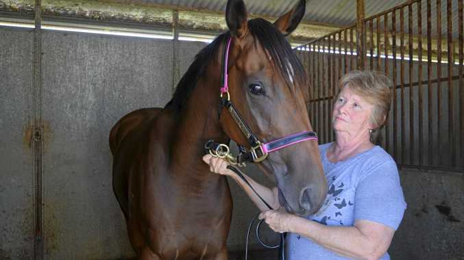 HIGHLY STRUNG: Owner and stable-hand Kerry Parish with Wasm at Hosier stables.