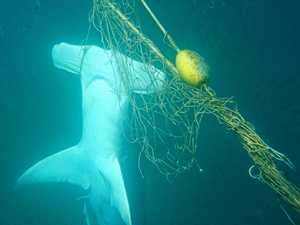 99% of shark net by-catch non-targeted species