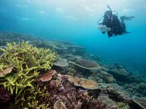 Gladstone Great Barrier Reef tours could be coming our way