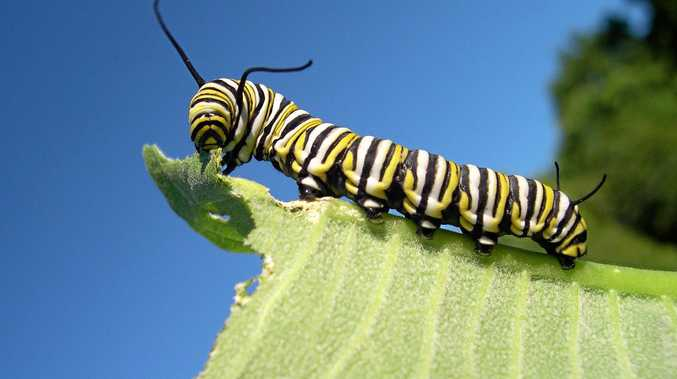 PESKY INSECTS: A small amount of damage by insects is natural and should be tolerated.