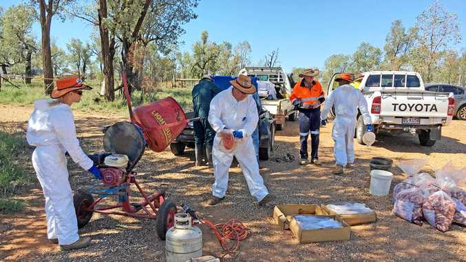 PLAN OF ACTION: Balonne Shire team members prepare meat for wild dog baiting.