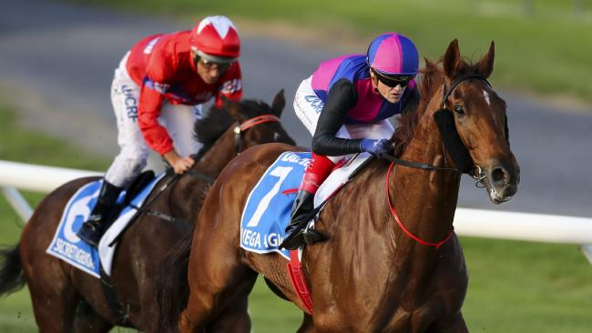 Vega Magic will return to defend his Goodwood title at Morphettville next month. Picture: Matt Turner