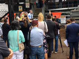 Casino saleyards official opening