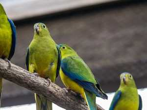 Parrot stuck on roof tells rescuers to 'f*** off'