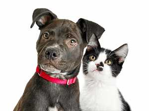 News regulations rein in cats and dogs