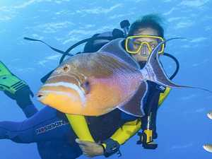 COLOURFUL ATTTRACTION: A queen trigger fish.