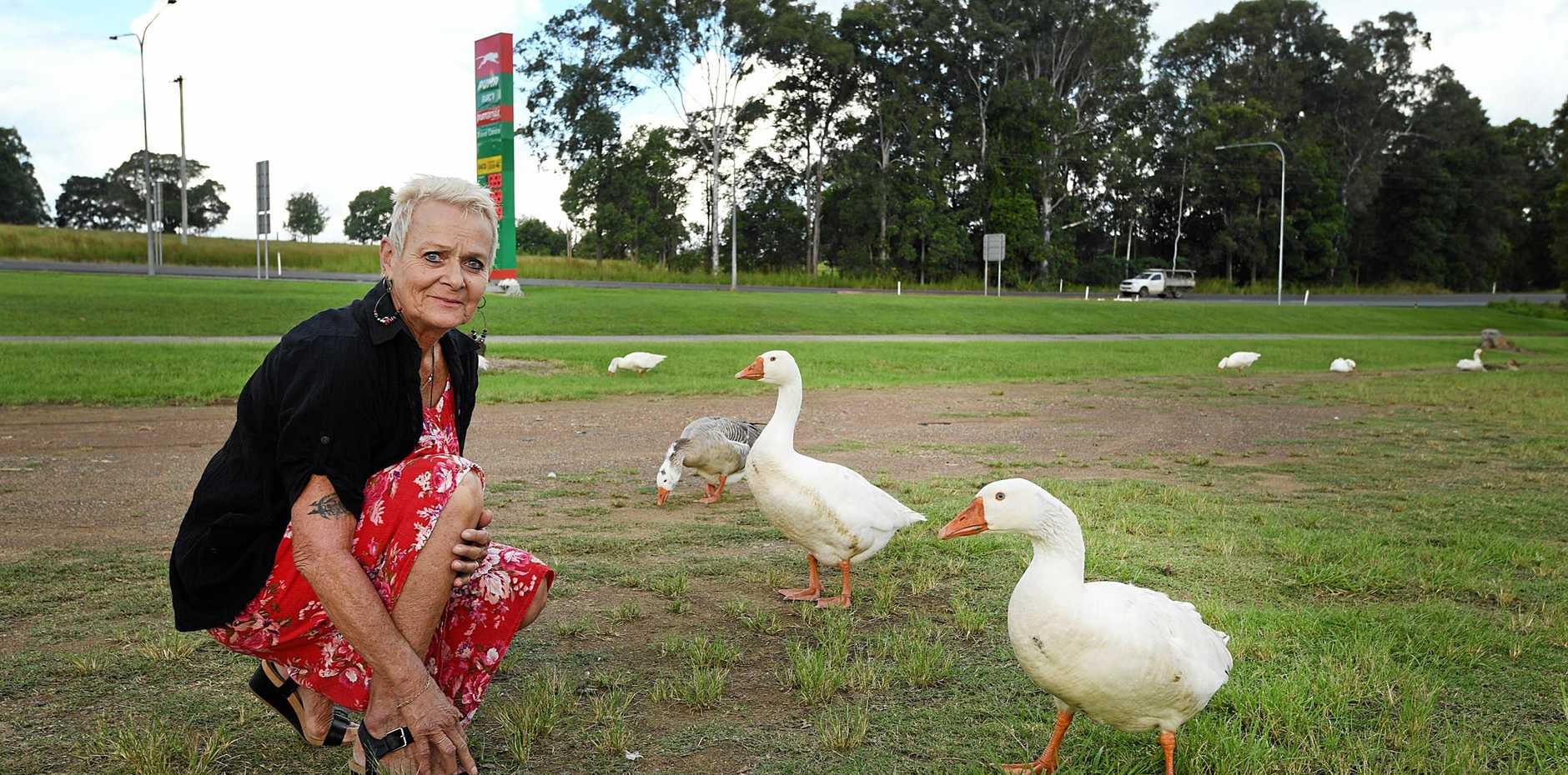GOOSE CHASE: Ella Holland is worried that wandering Kybong Geese will be run over when they stray too close to the highway.