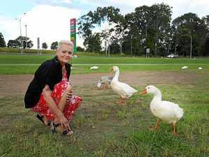 'Mother goose' worries over wayward gaggle