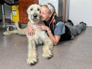 Doggy doctors ready for first patients at $750k vet