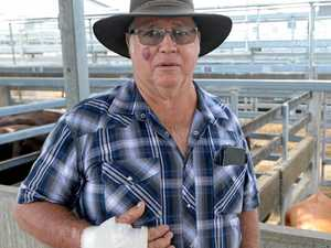 CQ farmers start to feel the effect of falling cattle prices