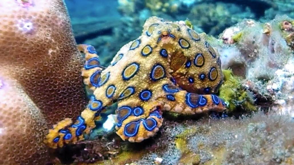 A man was flown off Lady Musgrave Island after suffering a suspected blue ringed octopus bite.