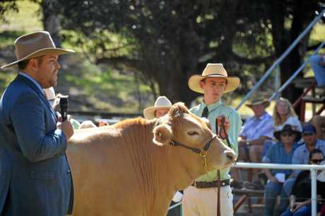 Mt Perry Cattle Judge Stuart Kirk judging a class that Kayne Mitchell entered.