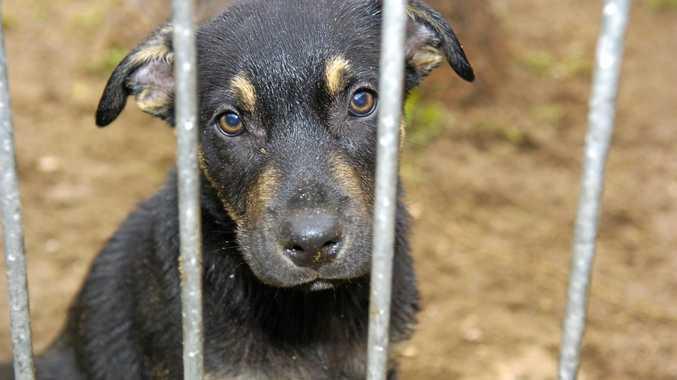 'Vigilante' jailed for attack on dog 'mistreater'