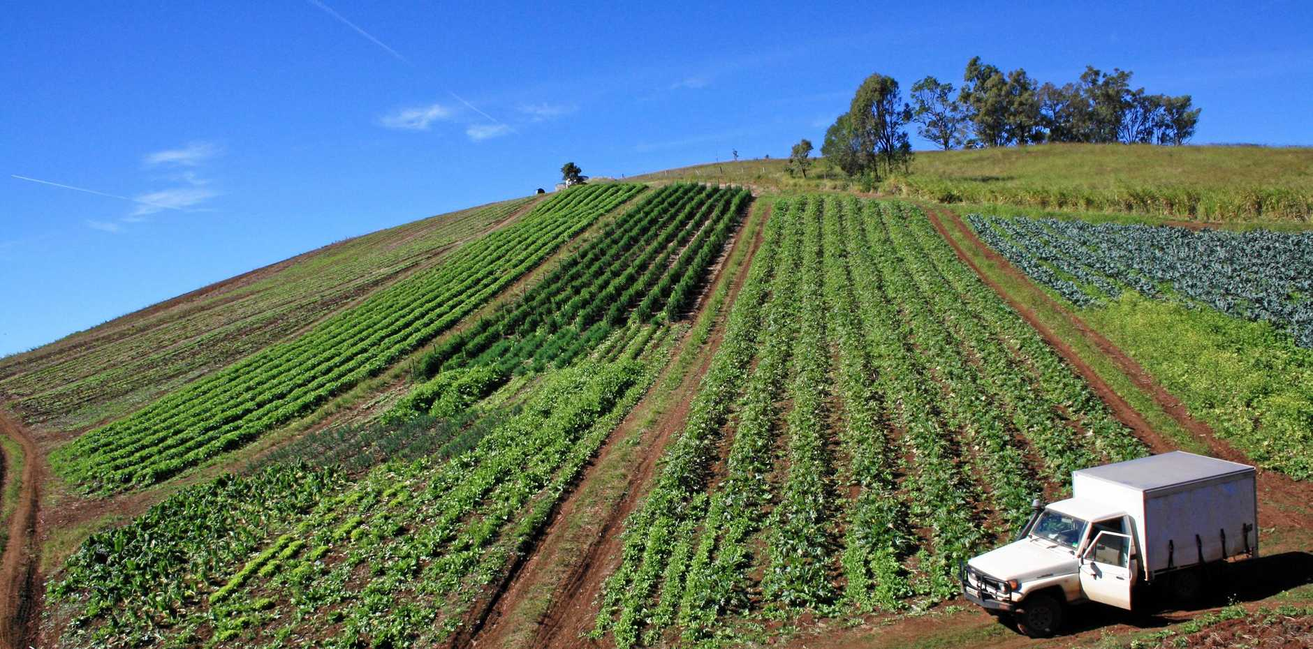PROTECTION: Fruit and vegetable growers will reap the benefits of a project to fight diseases and pests.