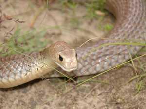 Suspected snake bite at high school